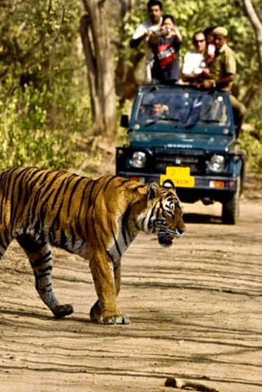 corbett-wildlife-weekend-package